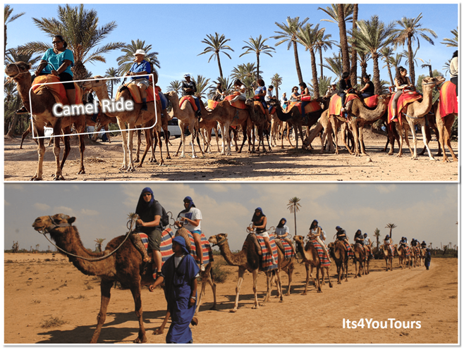 Excursion camel Agadir
