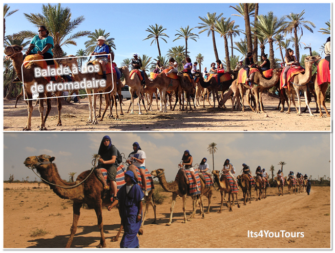 Excursion balade dromadaire Agadir