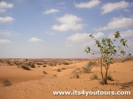 Demi-jour excursion petit désert & Tizinit